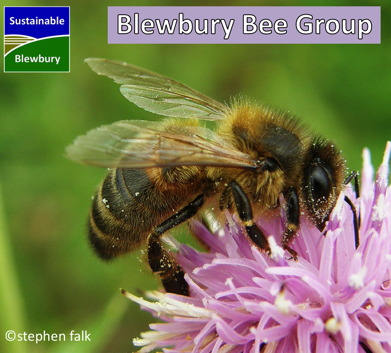 Blewbury Bee Group