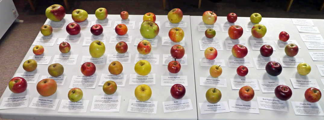 Blewbury apple varieties